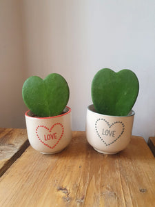 Sass and Belle love heart mini planter/indoor plant pot - red