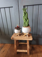 Load image into Gallery viewer, Marrakesh bowl indoor planter/plant pot on stand