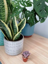 Load image into Gallery viewer, Super mini succulents - indoor plant