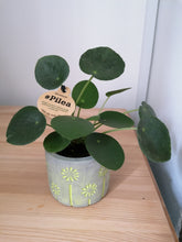 Load image into Gallery viewer, Mini Pilea Peperomoides Chinese Money Plant
