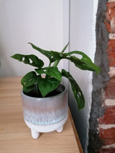 Load image into Gallery viewer, Mini Monstera Monkey Mask Cheese Indoor Plant