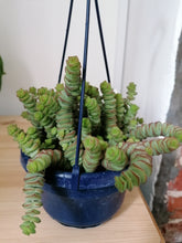 Load image into Gallery viewer, Crassula Hottentot 'String of Buttons' indoor plant