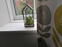 Load image into Gallery viewer, Mini Glass Terrarium with succulents - indoor plant