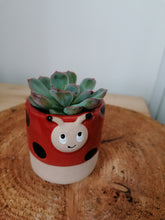 Load image into Gallery viewer, Pot Pals ladybird mini indoor plant pot