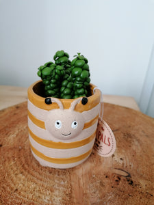 Pot Pals Bee mini indoor plant pot