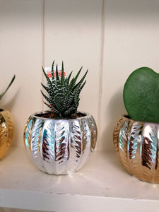 Mini Glamour indoor plant pot