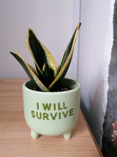 Load image into Gallery viewer, Sass and Belle I will survive mini planer/indoor plant pot
