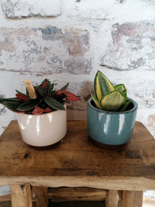 Burgon and Ball Mini Blue Malibu Succulent indoor plant pot