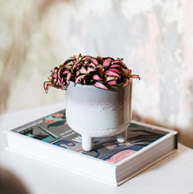 Load image into Gallery viewer, Sass and Belle Mojave Glaze Mini grey plant pot