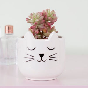 Sass and Belle Cats Whiskers Mini Plant Pot