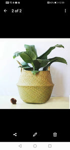 Large Seagrass Belly Basket - Natural