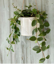 Load image into Gallery viewer, Burgon and Ball Modena indoor hanging planter/plant pot