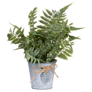 Sage Fern In Tin Pot