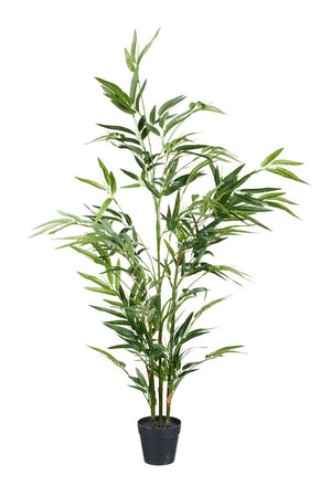 Parlane Green Bamboo Tree in Pot