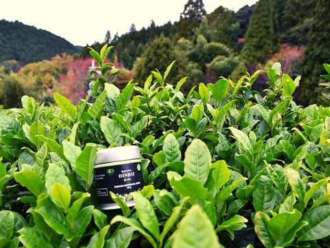 Matcha Tea Farms - Matcha Oishii