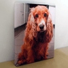 Your Photo On Canvas Or Photo Paper