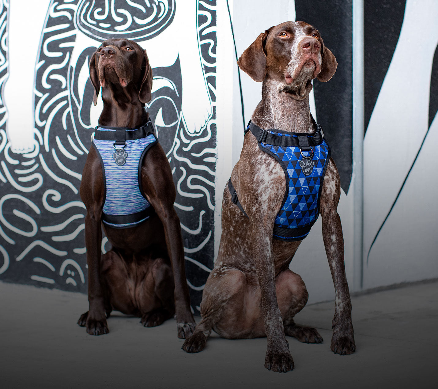 Two dogs wearing blue harnesses