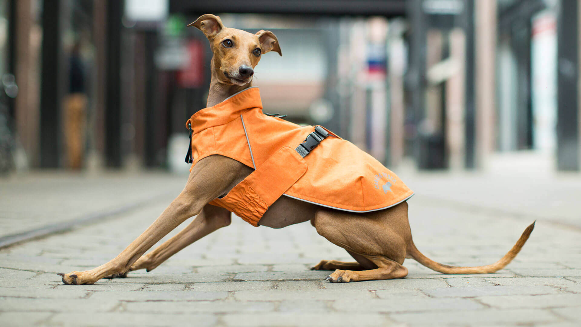 The Expedition Raincoat