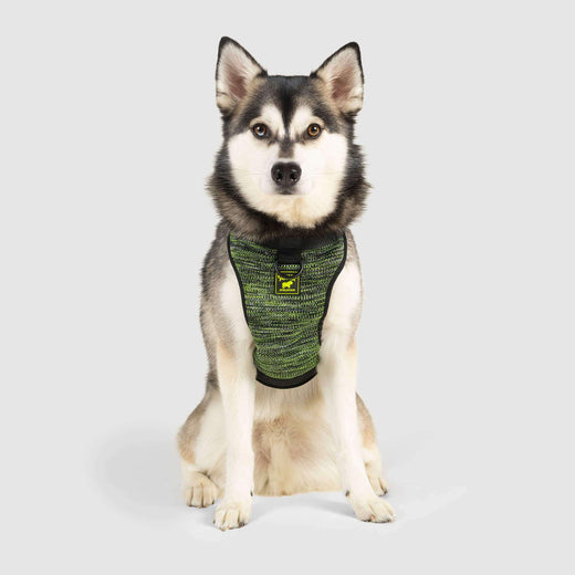 The Everything Dog Harness in Flatknit Neon Green, Canada Pooch Dog Harness