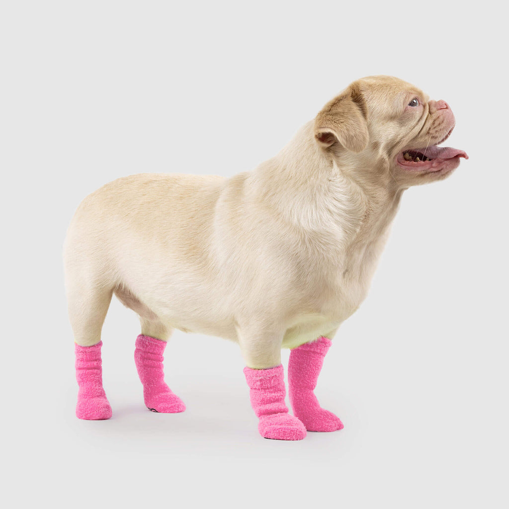 Highlighter Dog Socks in Neon Pink, Canada Pooch Dog Socks
