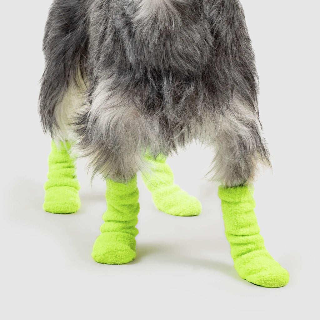 Highlighter Dog Socks in Neon Green, Canada Pooch Dog Socks