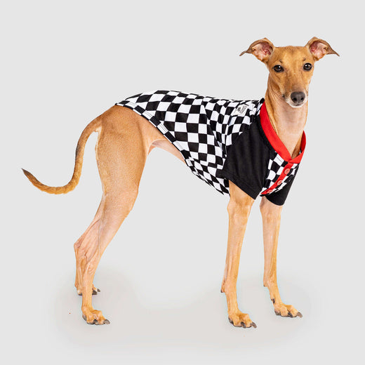 Not Your Basic Dog Tee in Black Checkerboard, Canada Pooch Dog T-Shirt