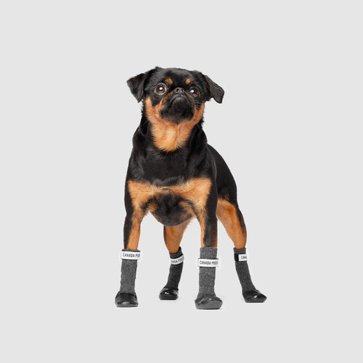 Secure Sock Boots in Black Grey, Canada Pooch Dog Socks