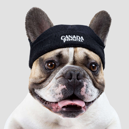 The Basic Dog Beanie in Black, Canada Pooch Dog Beanie