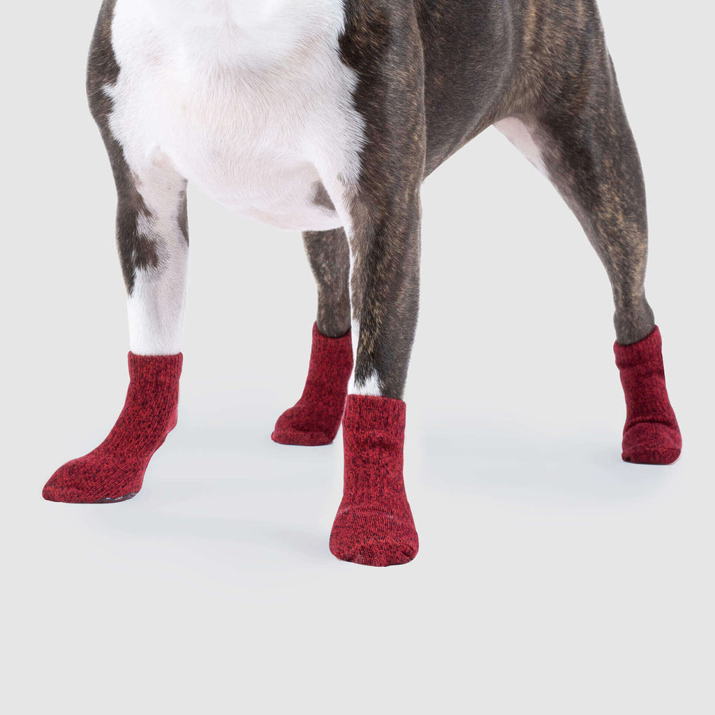 The Basic Dog Socks Red, Canada Pooch Dog Socks