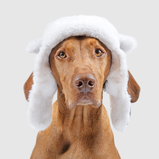 Arctic Air Dog Hat in Grey, Canada Pooch Dog Hat