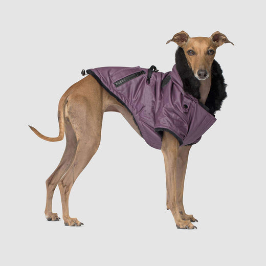 Urban Wax Dog Parka in Purple, Canada Pooch Dog Parka