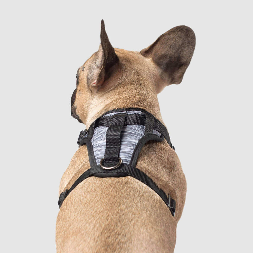 The Everything Dog Harness in Grey Spacedye, Canada Pooch Dog Harness