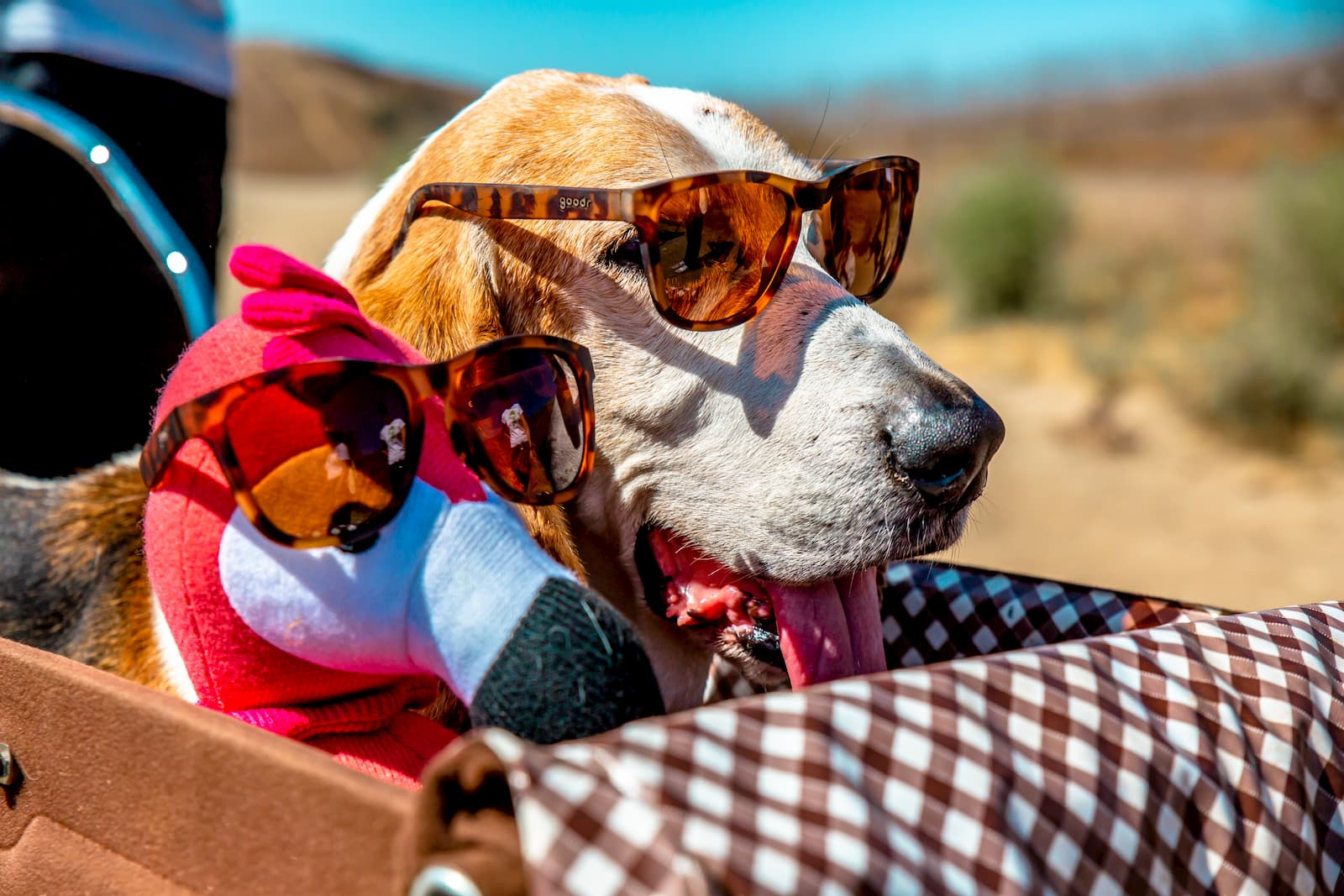 basset hound in tortoiseshell sunglasses with a flamingo