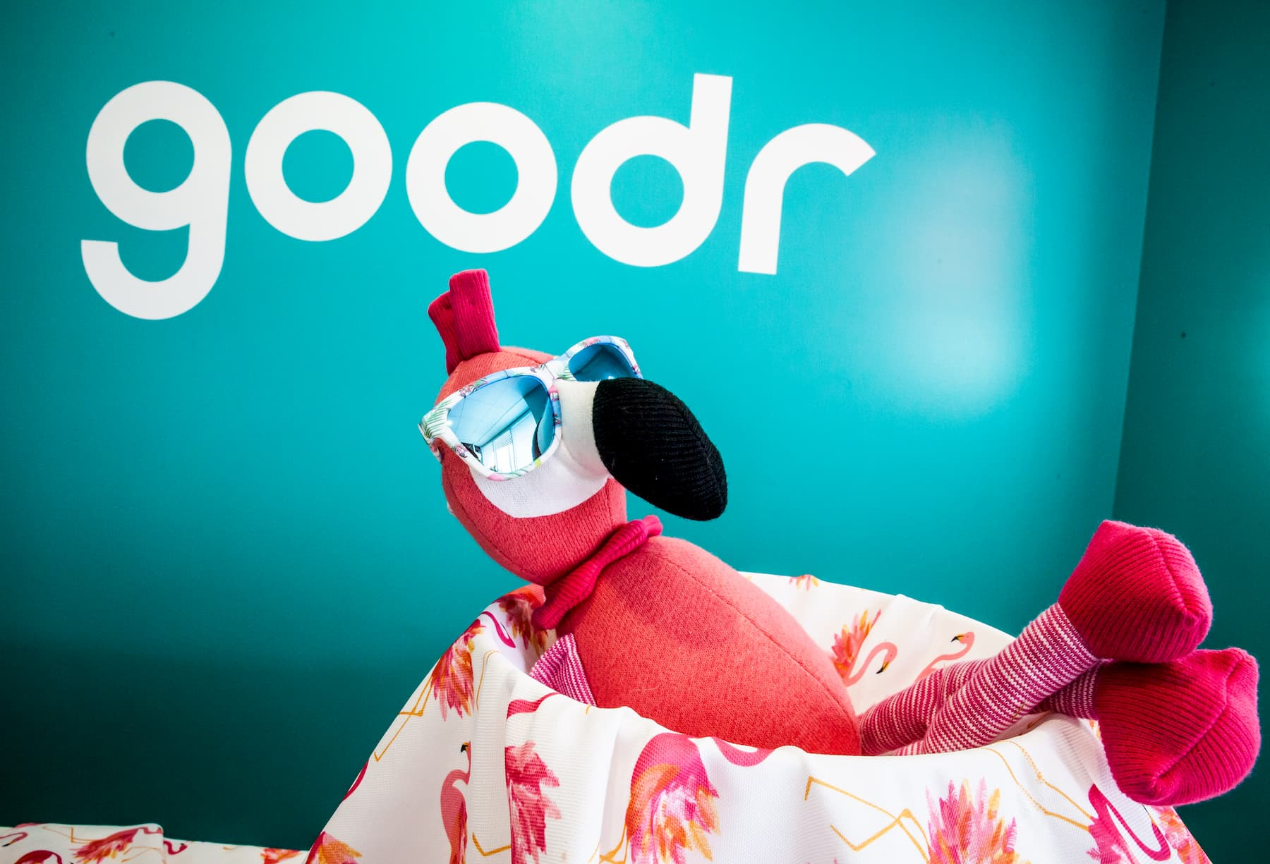 Flamingo in goodr sunglasses at goodr