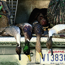 /blogs/haydels-pro-calling-blog/10-tips-for-better-duck-calling