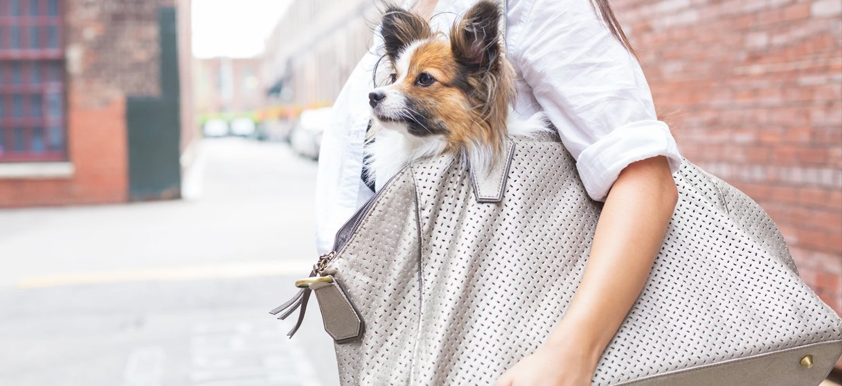 Travel Dog Carriers
