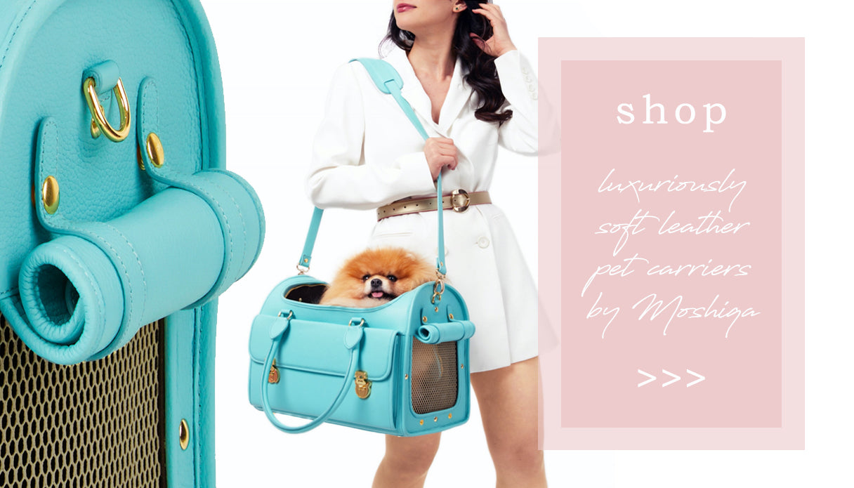 luxury leather-pet carriers b moshiqa - luxury modern dog boutique