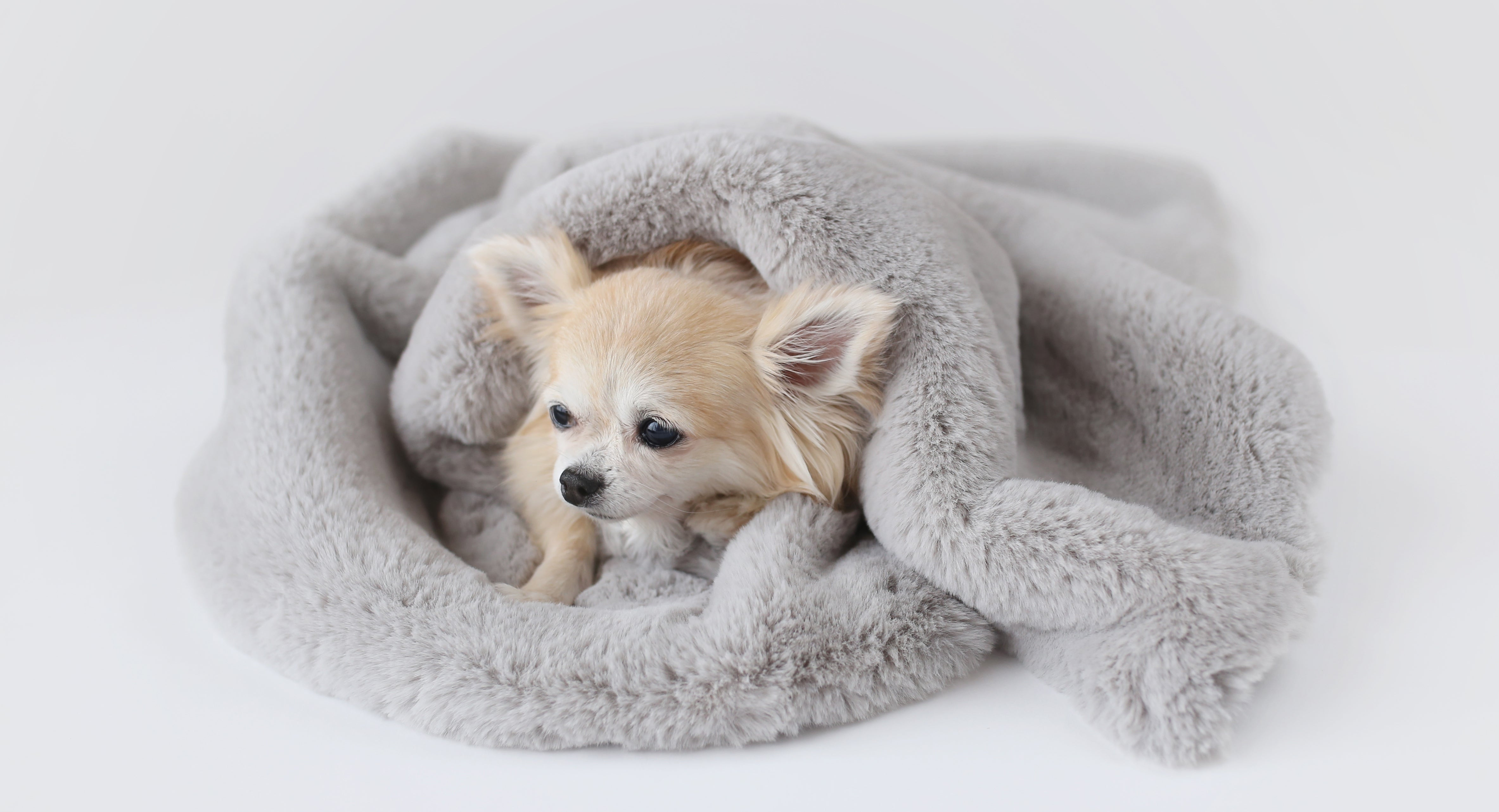 Luxury Pet Boutique Small Dog Beds and Blankets
