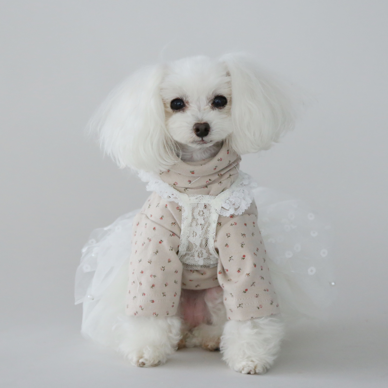 Designer Dog Clothes - Floral Dog Blouse - Teacups Puppies & Boutique