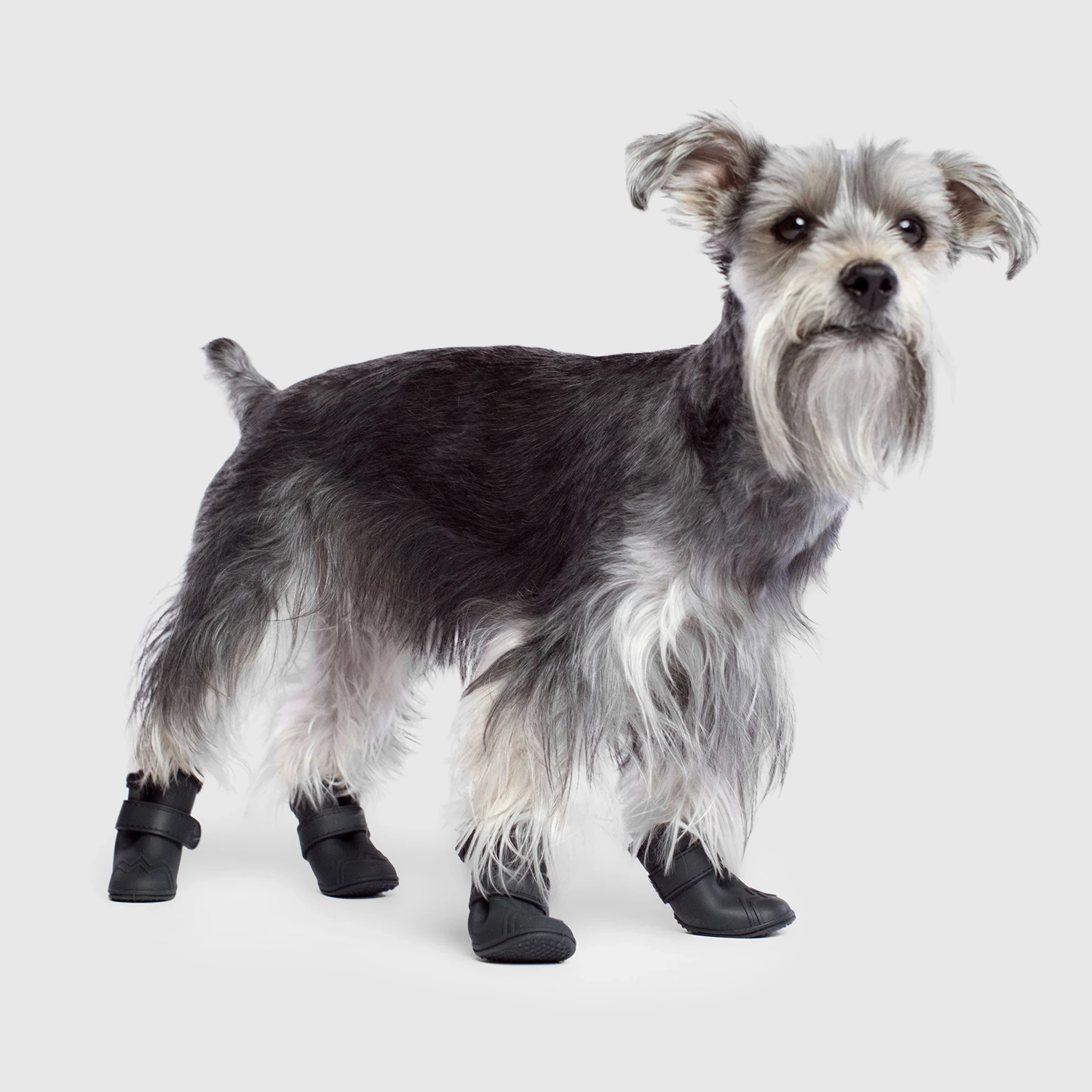 Lined Wellies Dog Boots: Black