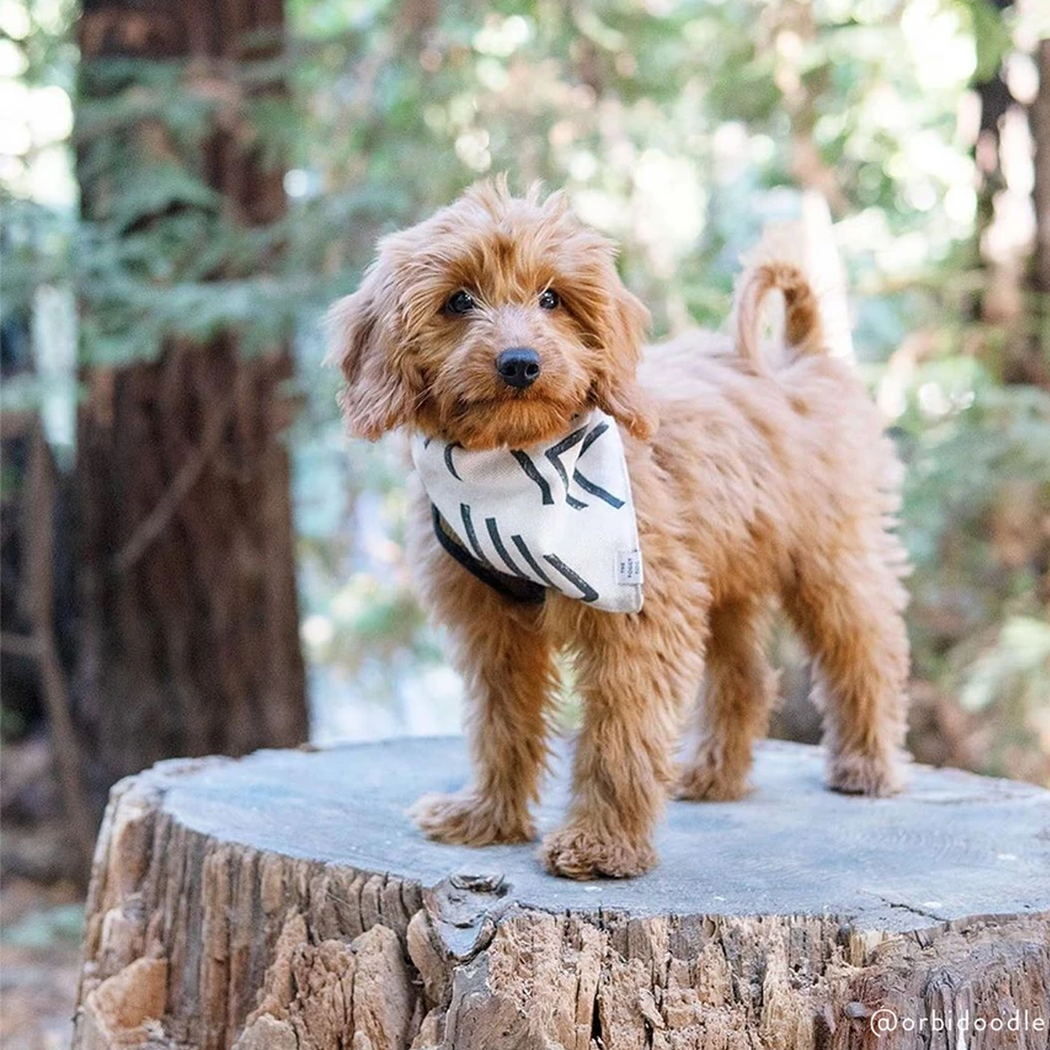 Modern Mud Cloth Dog Bandana