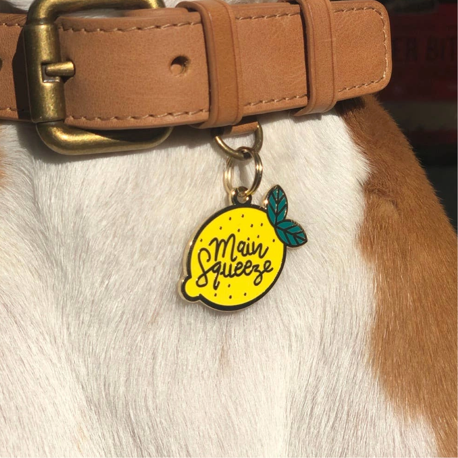 Main Squeeze Pet ID Tag