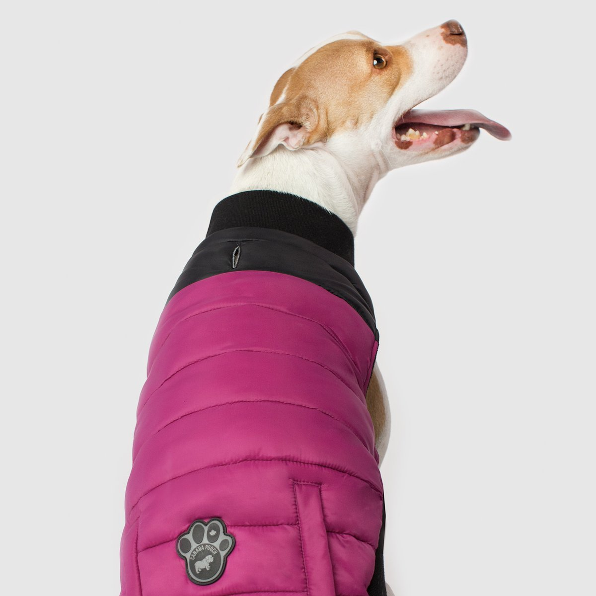 Plum Summit Strech Dog Vest