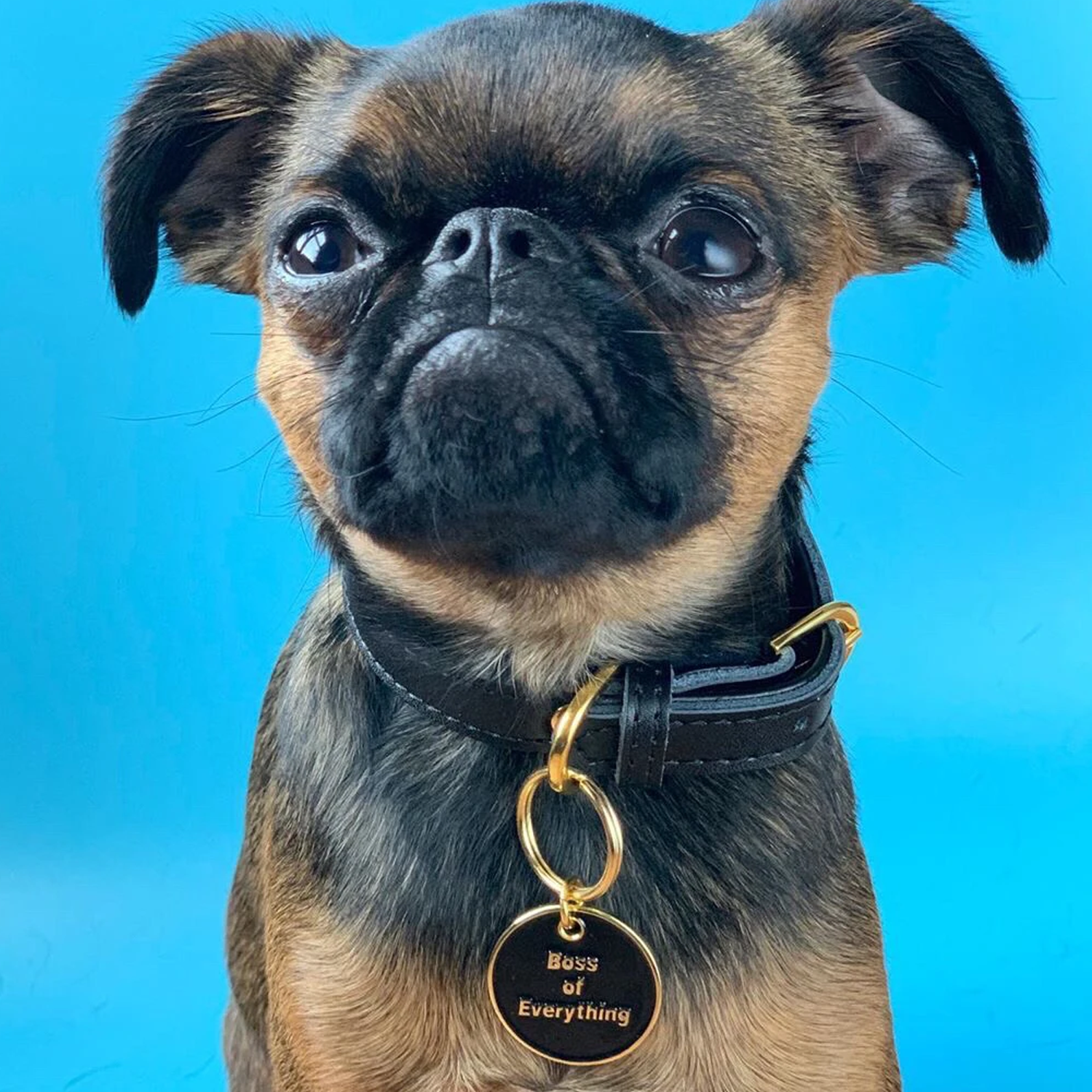 Boss Of Everything Pet ID Tag