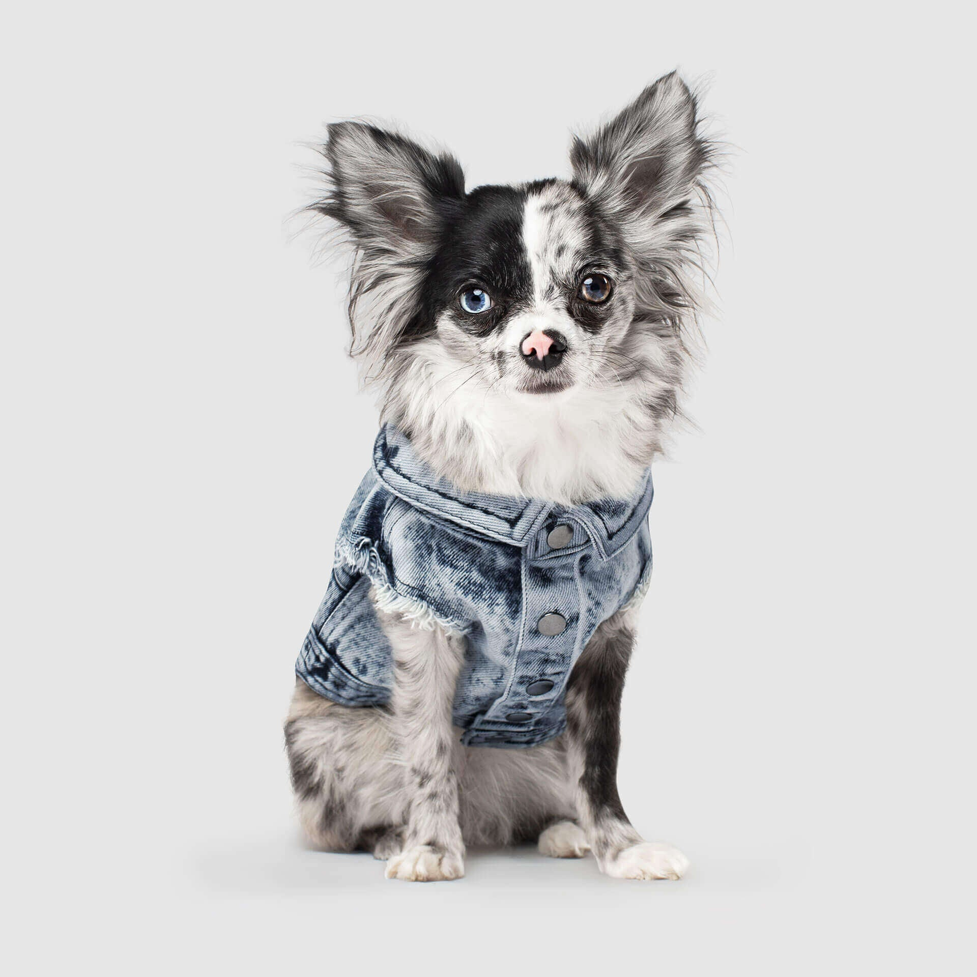 Pet Boutique - Designer Dog Clothes - Canada Pooch Downtown Dog Vest
