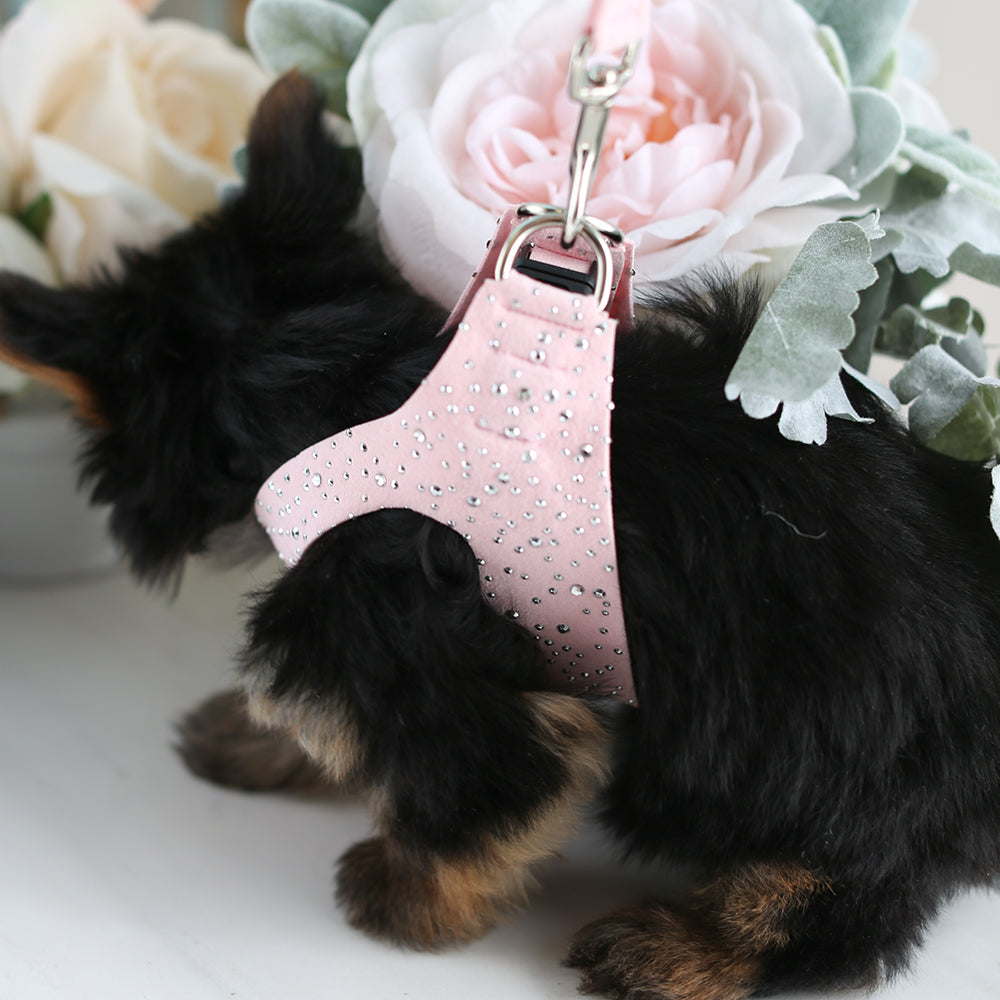Stardust Dog Harness