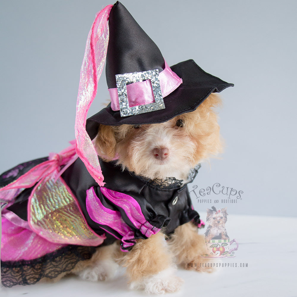Shiny Witch Dog Costume: Pink
