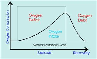 Exercise and Oxygen Deficit vs. Oxygen Debt