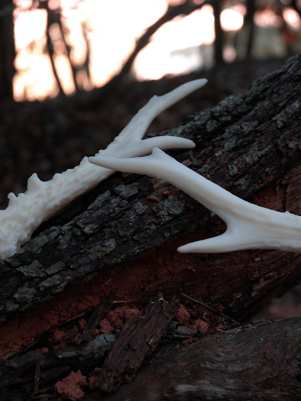 the Antler.