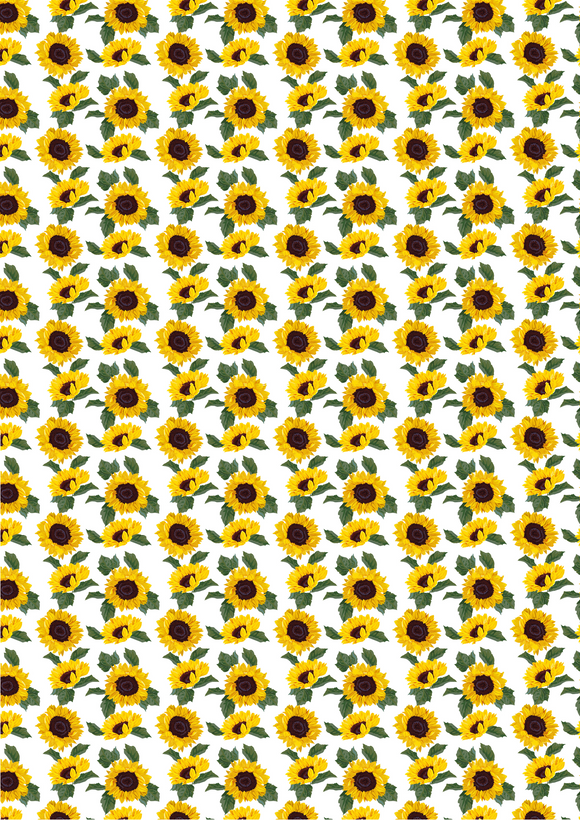Sunflowers and Leaves on a White Background